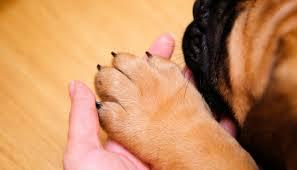 nageltang hond