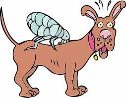 vlooienshampoo hond