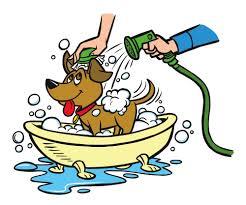 Hondenshampoo? Top 10 shampoos voor honden en puppy
